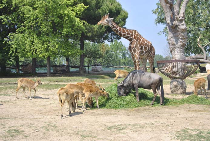интересные зоопарки Италии