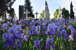 Английское кладбище во Флоренции
